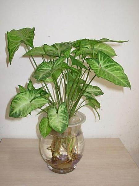 植办公室_适合放在办公桌上的植物有哪些-上海清丽园艺-植物租赁,花卉