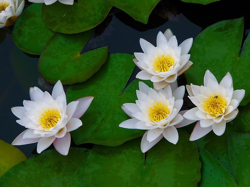 夏天開花的植物有哪些-上海清麗園藝-植物租賃 ...