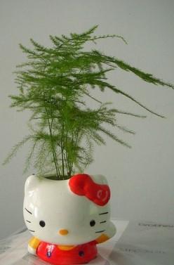 上海植物租赁,花卉租赁、清丽园艺